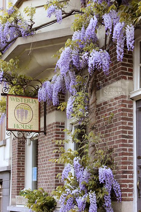 Belgium Wisteria Storefront